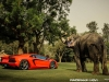 lamborghini-aventador-gets-adv1-wheels-and-elephant-photo-gallery_24