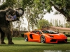 lamborghini-aventador-gets-adv1-wheels-and-elephant-photo-gallery_26