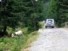 mercedes-benz-transylvania-adventure-2013-60