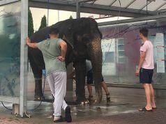 slon-v-mycce-kutna-hora