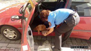 Strážníci na poslední chvíli zachránili psa uvězněného v rozpáleném autě